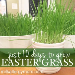 Grow Real Easter Grass in 7 Days!