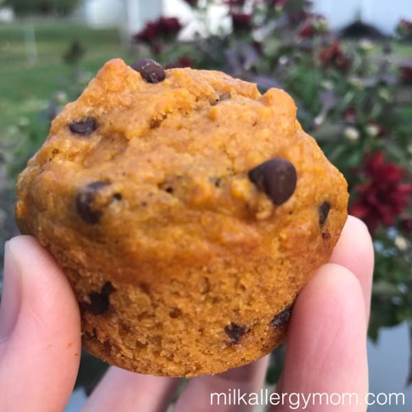 dairy and egg free pumpkin chocolate chip muffins